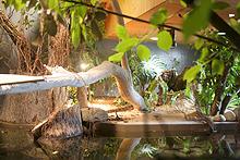 オオアナコンダ水槽 – 園内案内